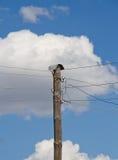 Alambres de líneas eléctricas eléctricas Foto de archivo libre de regalías