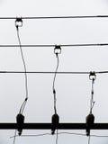 Alambres de teléfono foto de archivo libre de regalías