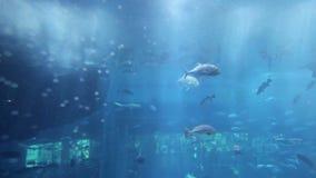 Alameda de Dubai del acuario metrajes