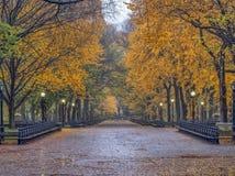 Alameda do Central Park no outono foto de stock royalty free