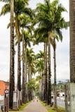 Alameda Duque de Caxias Street Blumenau, Santa Catarina Images stock