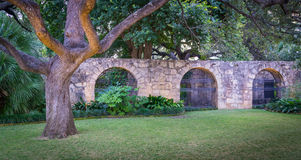 The Alamo Front Wall. Front wall and tree of The Alamo stock photography