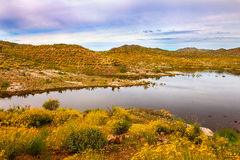 Alamo Lake State Park in Arizona Stock Images