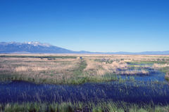 Alamosa National Wildlife Refuge in Colorado. Alamosa National Wildlife Refuge is a great marsh on the Rio Grande, with Blanca Mountain in the background Royalty Free Stock Photo