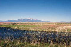 Alamosa National Wildlife Refuge in Colorado. Alamosa National Wildlife Refuge is a great marsh on the Rio Grande, with Blanca Mountain in the background Stock Images
