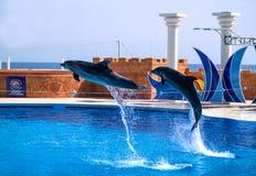 Alanya, Τουρκία - 3 Μαΐου 2014: Δελφίνι Sealanya - παρουσιάζει χαρακτηρισμό των δελφινιών και των λιονταριών θάλασσας Στοκ Εικόνα
