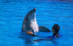 Alanya, Turkey - May 3, 2014: Dolphin Sealanya - shows featuring dolphins and sea lions. Stock Photo