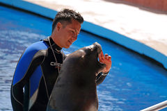 Alanya, Turkey - May 3, 2014: Sea lion and trainer on the presentation of the dolphinarium Sealanya. royalty free stock photos