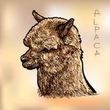 Alapca Royalty Free Stock Image