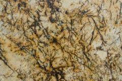 Alaranjado, amarelo, branco e granito de Brown Foto de Stock