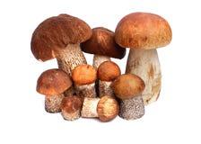 Alaranjado-tampão do cogumelo Fotografia de Stock