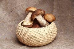 Alaranjado-tampão do cogumelo Imagens de Stock