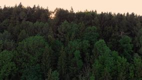 Alargamento da lente com voo sobre uma floresta em Baviera, Alemanha vídeos de arquivo