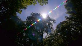 Alargamento da lente de Sun na floresta vídeos de arquivo