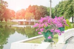 alargamento do jardim e da luz Foto de Stock