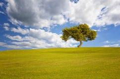 Alarge färgar det gamla trädet med höst i en öppen äng royaltyfri fotografi