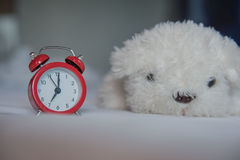 A alarm clock with cute white dog  doll on the bed in the morning Stock Photo