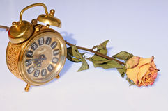 Alarm clock and dry yellow rose. Old-fashioned alarm clock set to quarter to eight and a dry yellow rose Stock Photography