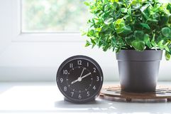 Alarm clock and flower in pot on the window sill with the morning sunlight. Good morning concept. Black alarm clock and green flower in pot on the white window royalty free stock images