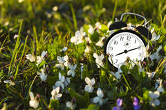 Alarm clock and flowers. Alarm clock placed among the flowers, representing the end of winter Royalty Free Stock Images