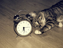 Alarm clock and kitten. Classic alarm clock and kitten laying on the floor in the morning stock photos