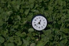 Alarm clock in sunlit spring field stock photography