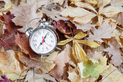 Alarm on fallen leaves Royalty Free Stock Images