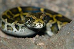 Alarma de la serpiente Imágenes de archivo libres de regalías
