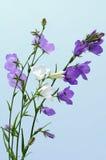 Alarmas de la flor Fotografía de archivo libre de regalías