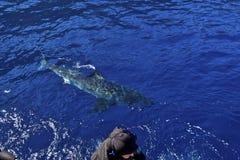 Alarme do tubarão foto de stock royalty free