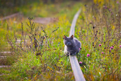 The alarmed cat sitting on rails. Royalty Free Stock Image