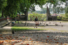 Alas bosque del mono de Kedaton Fotos de archivo