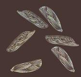 Alas de insectos Elementos del diseño Imagen de archivo