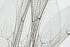 Alas de la libélula Fotografía de archivo