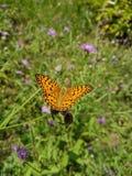 Alas de la mariposa Foto de archivo libre de regalías
