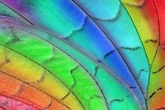 Alas de la mariposa del arco iris Foto de archivo libre de regalías