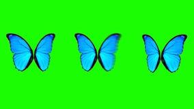 Alas de la mariposa que se mueven en diversa velocidad en un fondo de pantalla verde stock de ilustración