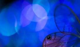 Alas de la mariposa y bokeh colorido Foto de archivo