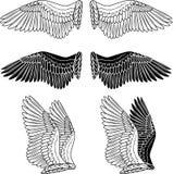 Alas de la paloma Imagen de archivo libre de regalías