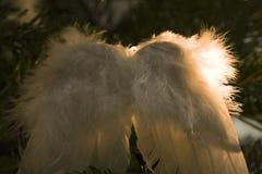 Alas del ángel Imagen de archivo libre de regalías