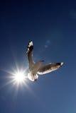Alas del ángel Fotografía de archivo libre de regalías