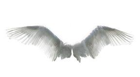Alas del ángel aisladas en blanco imagen de archivo