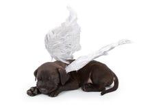 Alas del ángel de Labrador que desgastan del perrito negro de la mezcla Fotografía de archivo libre de regalías