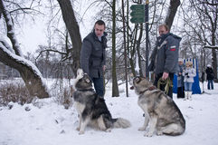 Alaskan Malamute Dogs with Owners in Park Royalty Free Stock Image