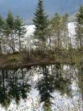 Alaska, śnieżny park z sosnami, odzwierciedlający wizerunek obrazy royalty free