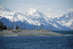Alaska. Mountains, dropped ground, earthquake aftermath, dead trees Royalty Free Stock Photography