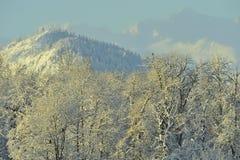 Alaska. Stockbilder