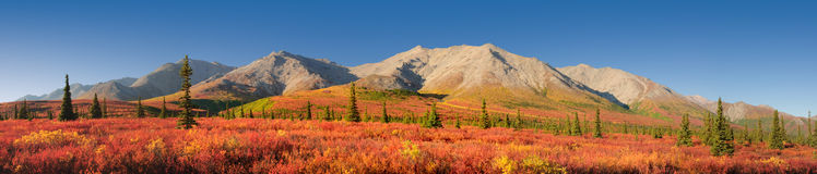 Alaska autumn Denali National Park. Mountainous scenery Stock Photos