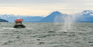 Alaska - baleia de Humpback grande 2 do bote Imagens de Stock Royalty Free