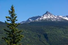 Alaska bergmaxima Arkivbild